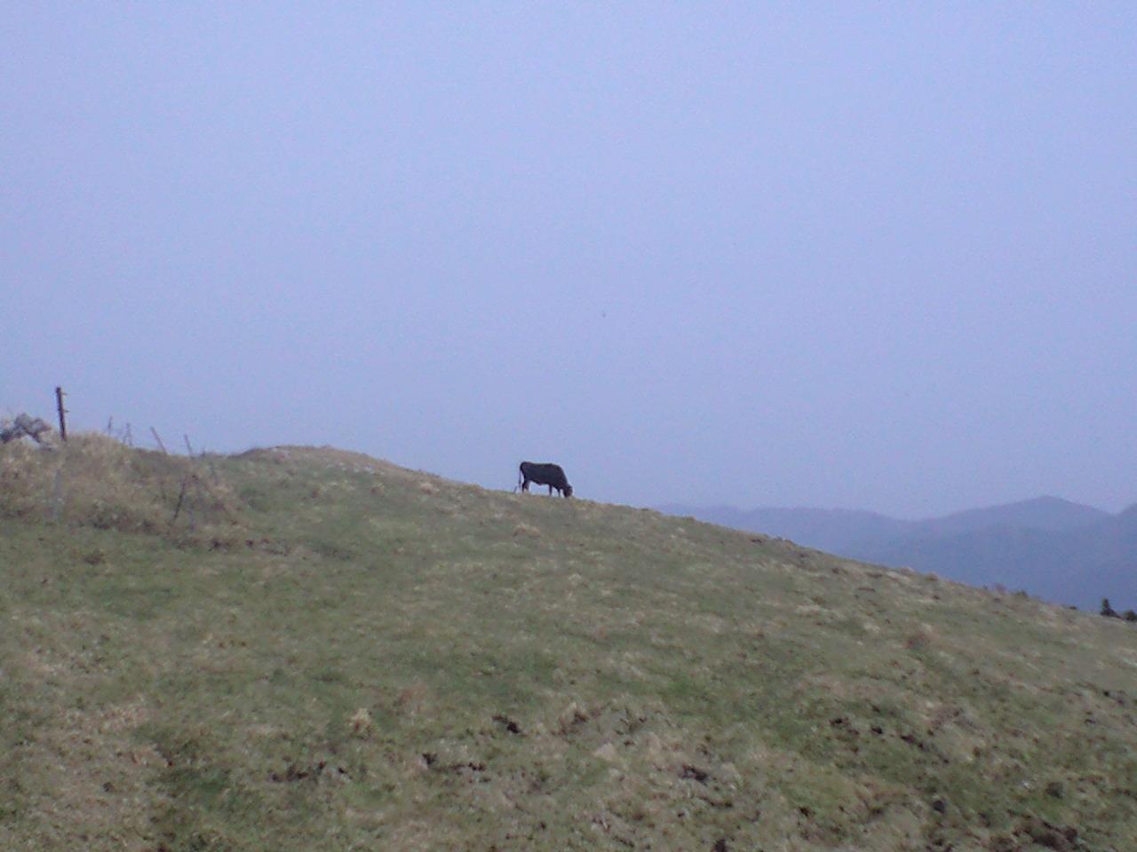 天空の牛?
