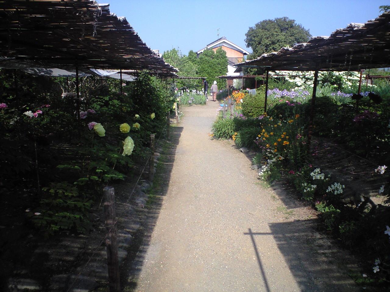 大和五條金剛寺のぼたん園