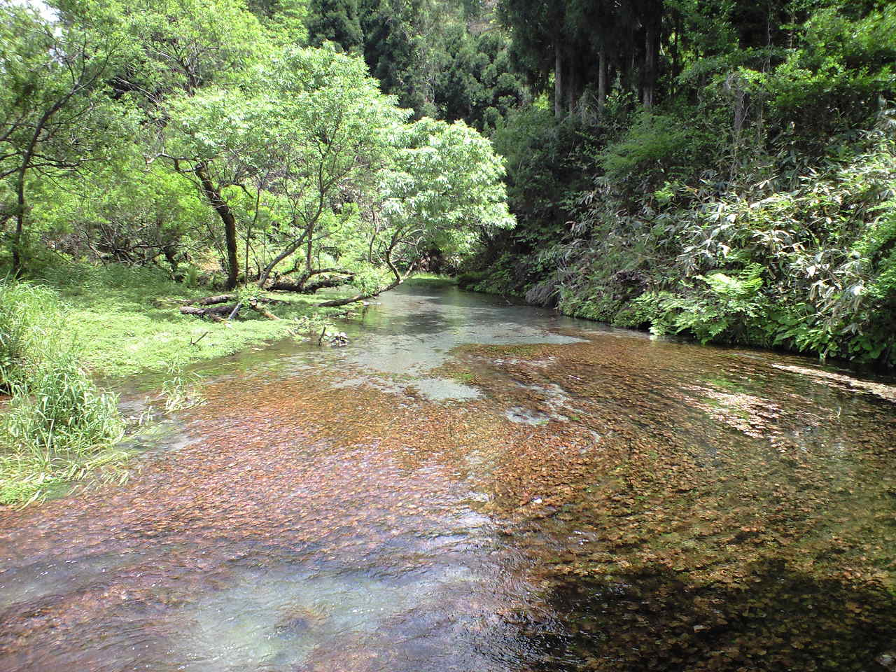 地蔵滝の湧水