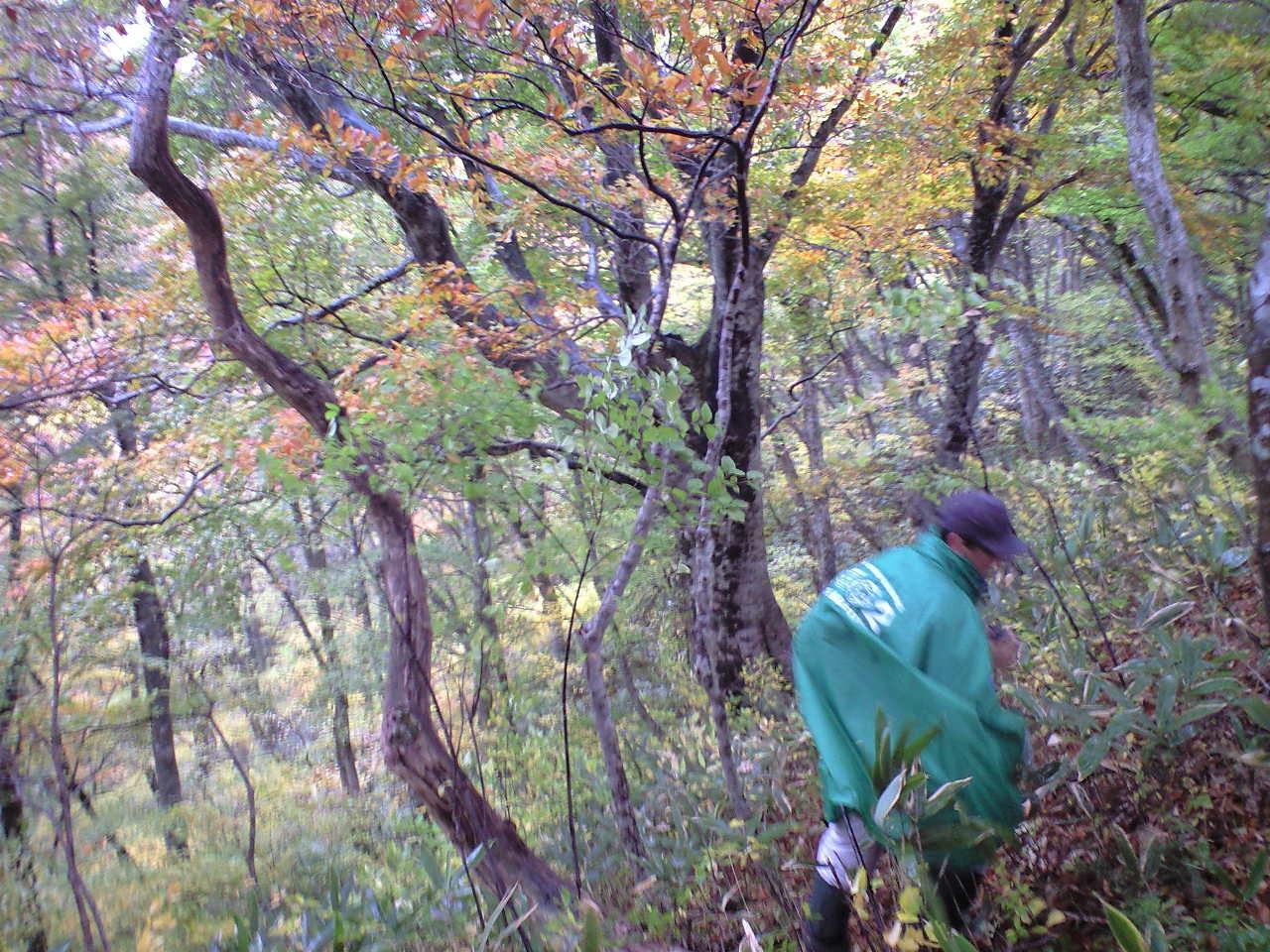 大山寺〜丸山への獣道を行く