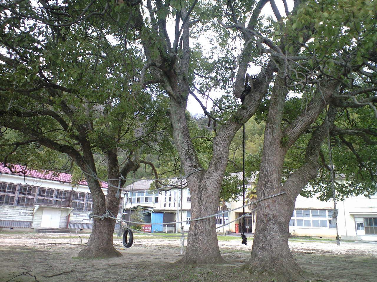 大きなクスの木のブランコで遊んだ記憶