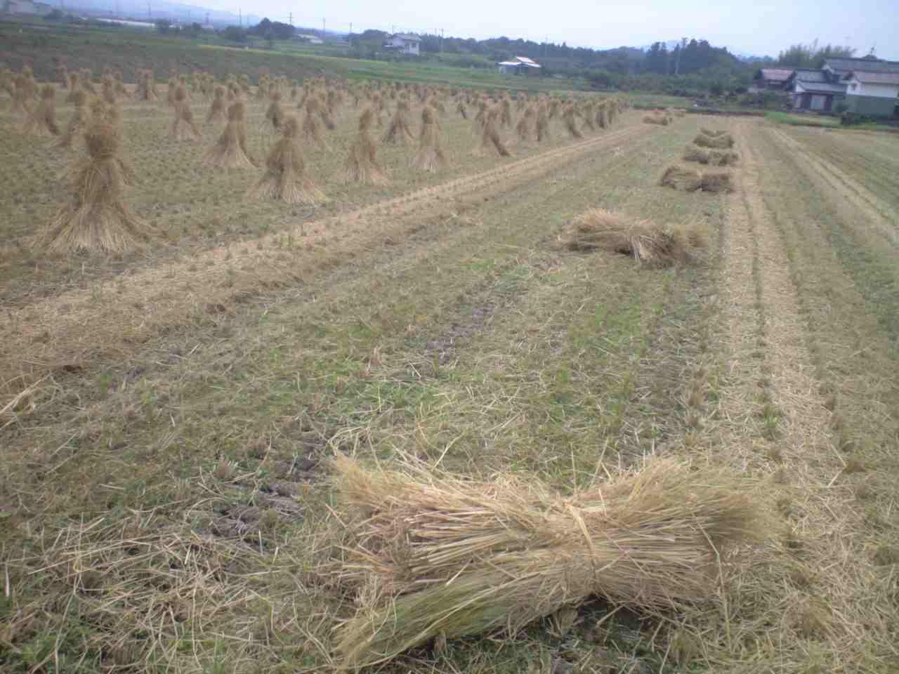 田んぼは循環している。