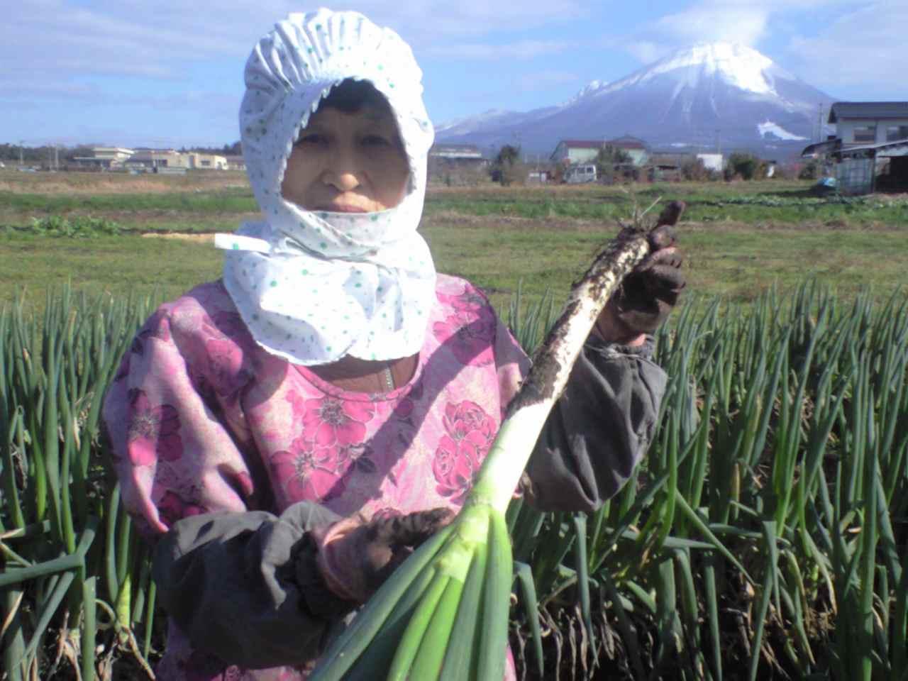 鍋の季節、鳥取県の白ネギを食べてネ!