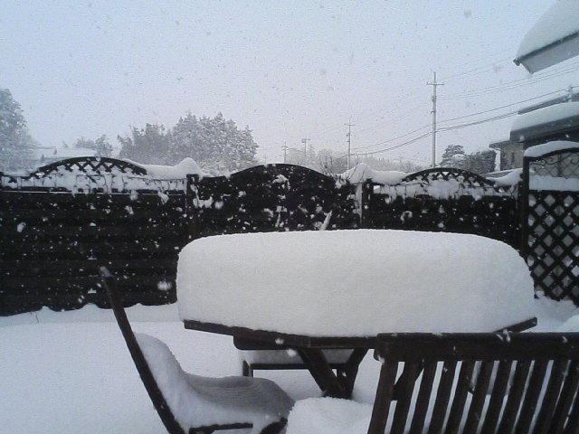 一転して、朝から大雪、大山が見えない・・・。