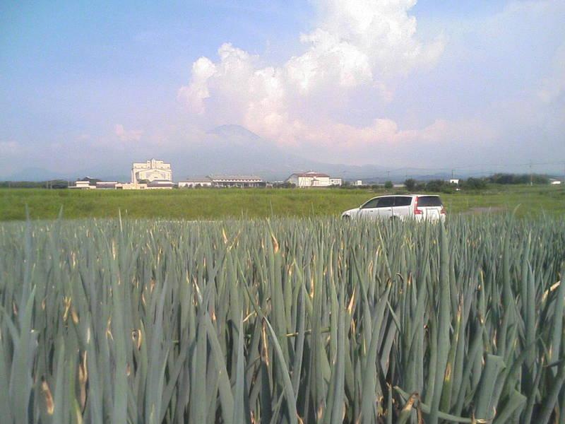 大山麓の白ネギ畑