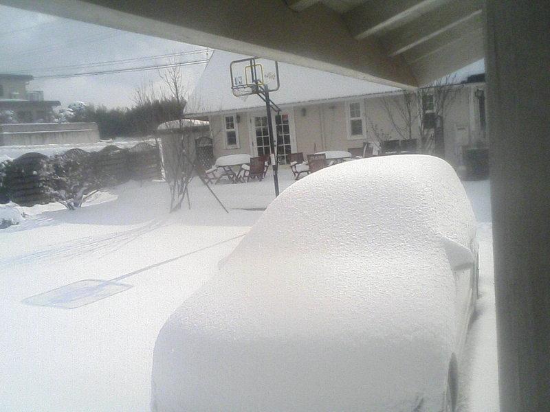 大山は麓まで大雪です!