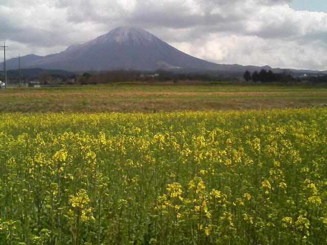 伯耆大山と菜の花畑