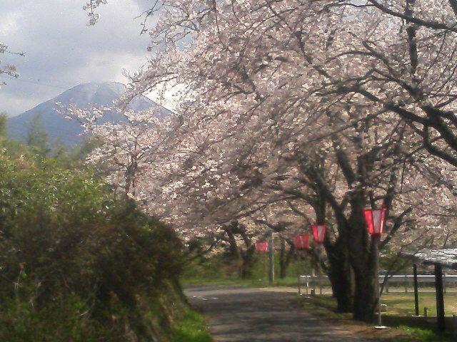 大山を仰ぎ見る八郷地区・番原の桜