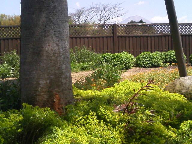 庭が黄緑色に