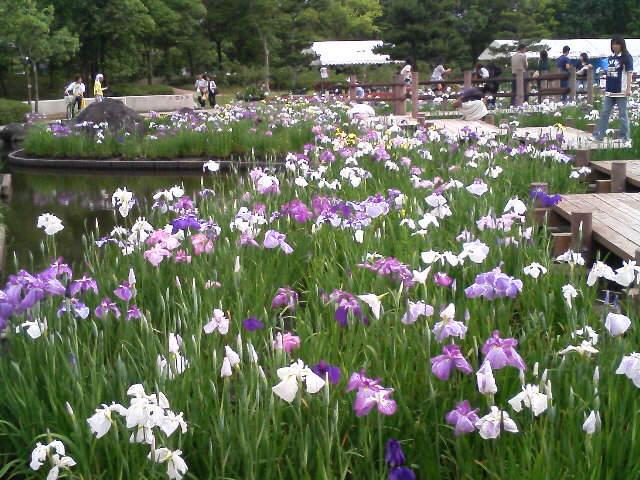 東郷湖あやめ池公園
